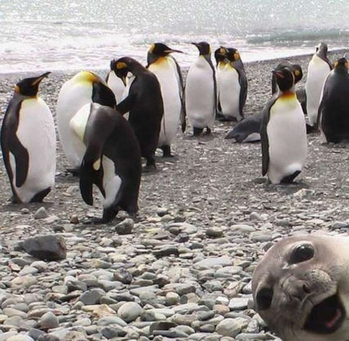 26 Life Lessons We Can Learn From Animals - Never stop having fun. Even if you're a grown up.
