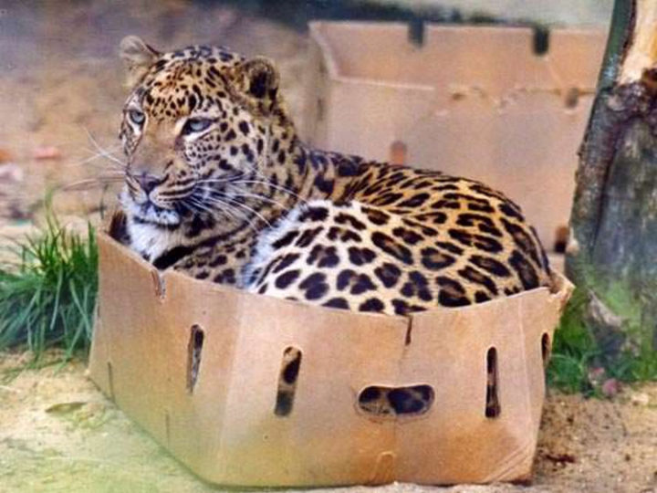 26 Life Lessons We Can Learn From Animals - You're never too old to make a fort.