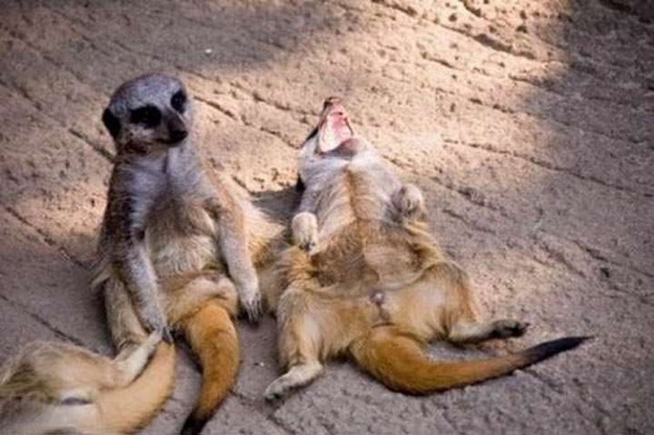 26 Life Lessons We Can Learn From Animals - Laughter is the best medicine.