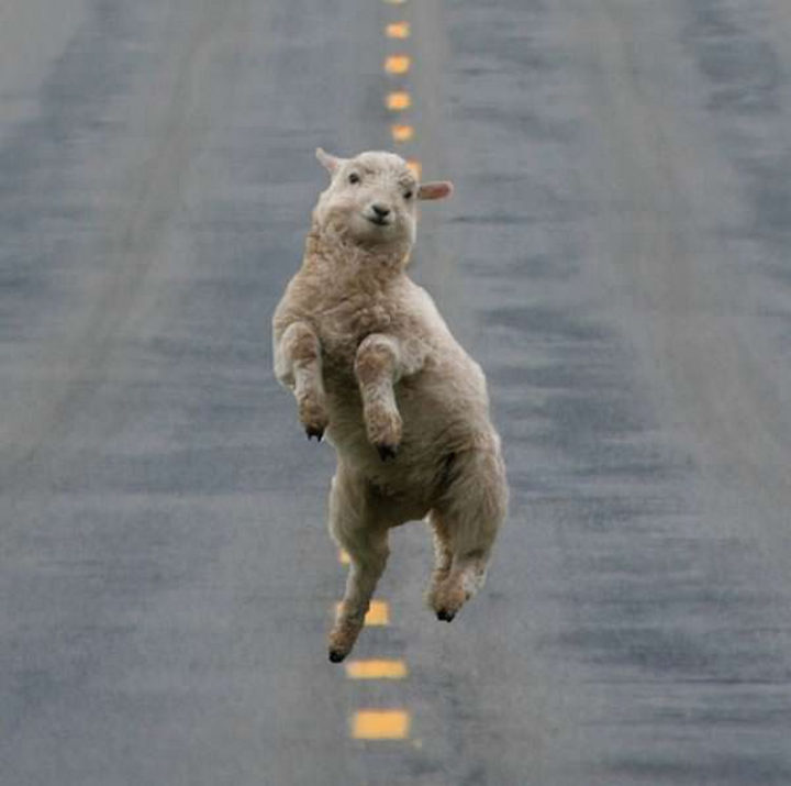 26 Life Lessons We Can Learn From Animals - Frolic when you feel like it.