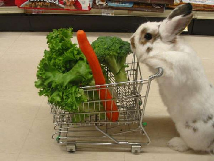 26 Life Lessons We Can Learn From Animals - Fill your life with your favorite things.