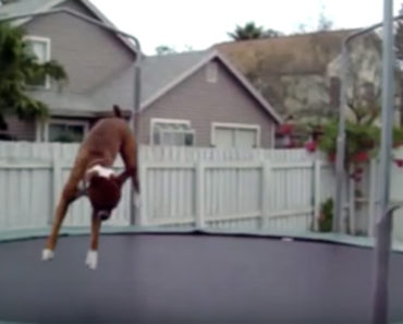 These Animals Are Lovin' Summer and Jumping on Trampolines. Hilarious!!