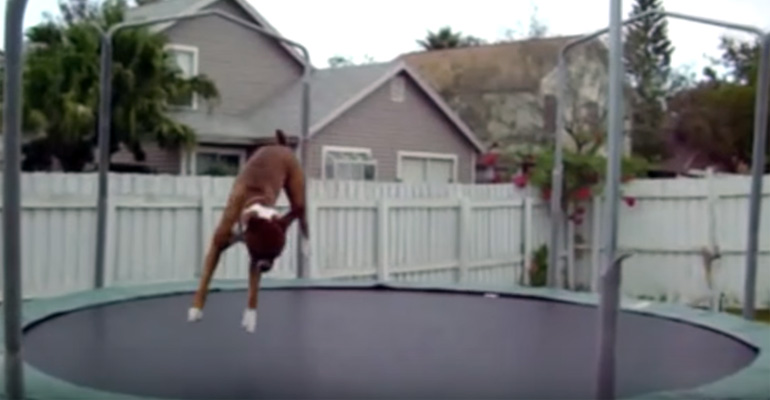 Watch Animals Jumping on Trampolines and Having Fun.