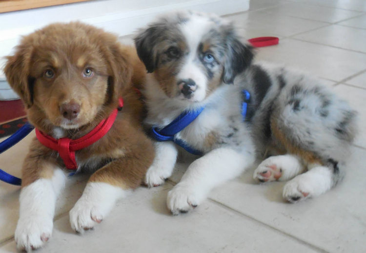 The family named their dogs Booker and Tiberius and these two brothers are inseparable.