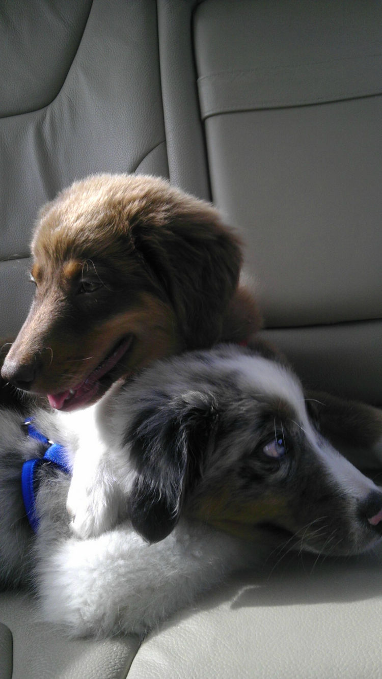 Tiberius couldn't ask for a better companion than his own brother.