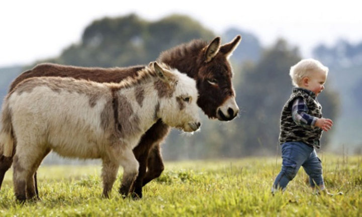 Donkeys are amazed by children and kids are just as amazed by them.