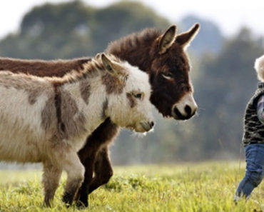 Miniature Donkeys Are Real and They're the Cutest Thing Ever.