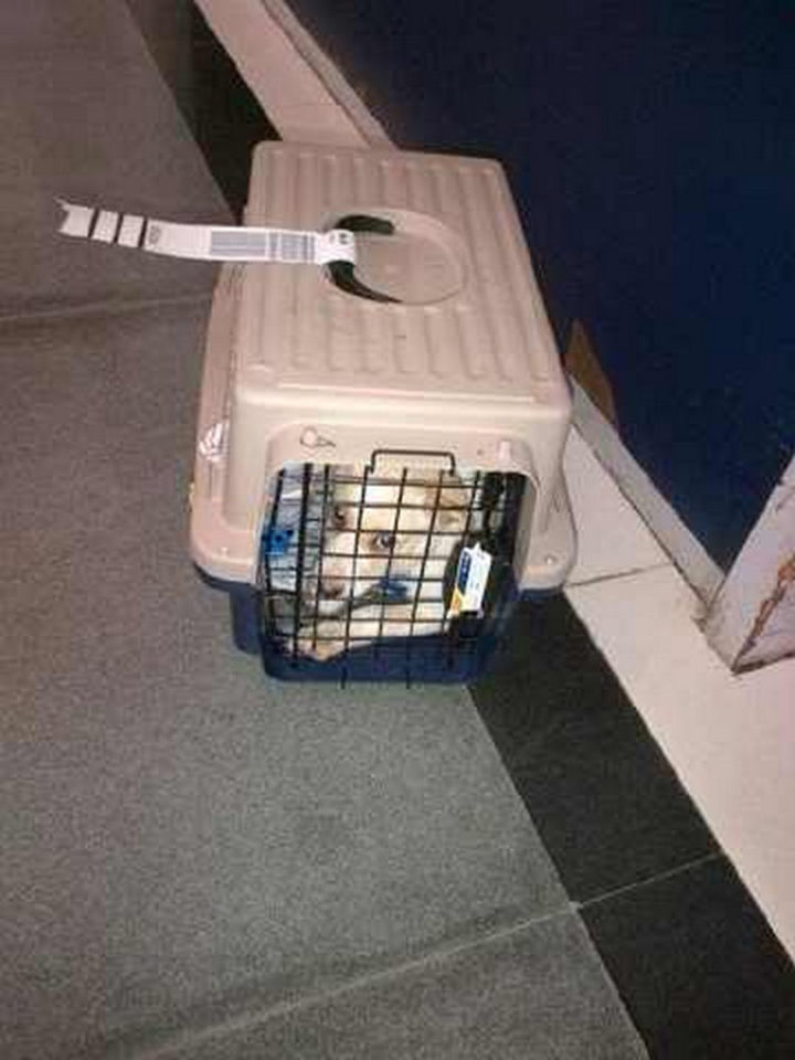 Once cleared, he had to spend 40 hours in a crate for the flight home in cargo. It was the first time he spent time apart from his mom.