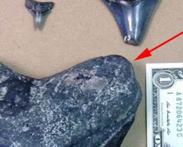 Scuba Diver Finds Megalodon Tooth off the West Coast of Venice Beach.