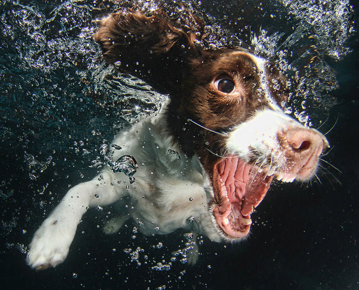 18 Funny Photos of Dogs Fetching Balls Underwater - Seth Casteel