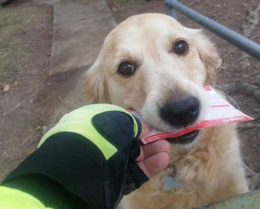Australian Postman Creates Sweet Letters for Pippa the Dog.