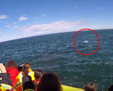 People Were out Whale Watching but They Never Expected to See THIS!