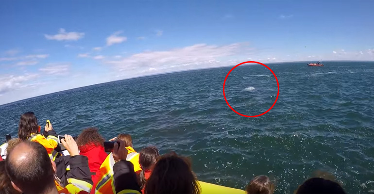 Whale Watchers Get Incredible View of Finback Whale in Quebec.