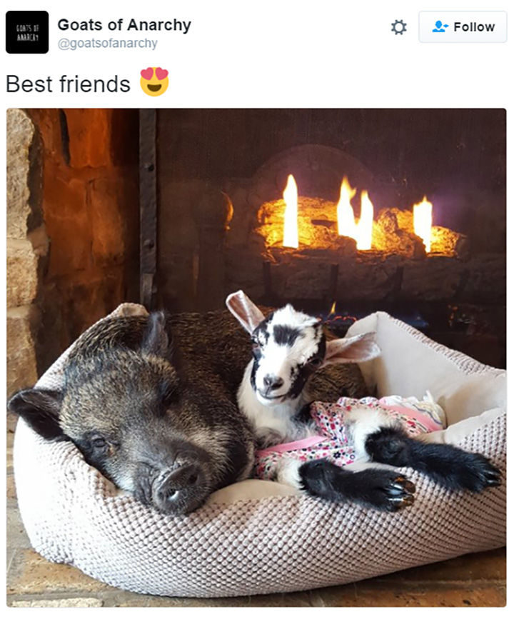 30 Happy Pictures - Best friends forever.