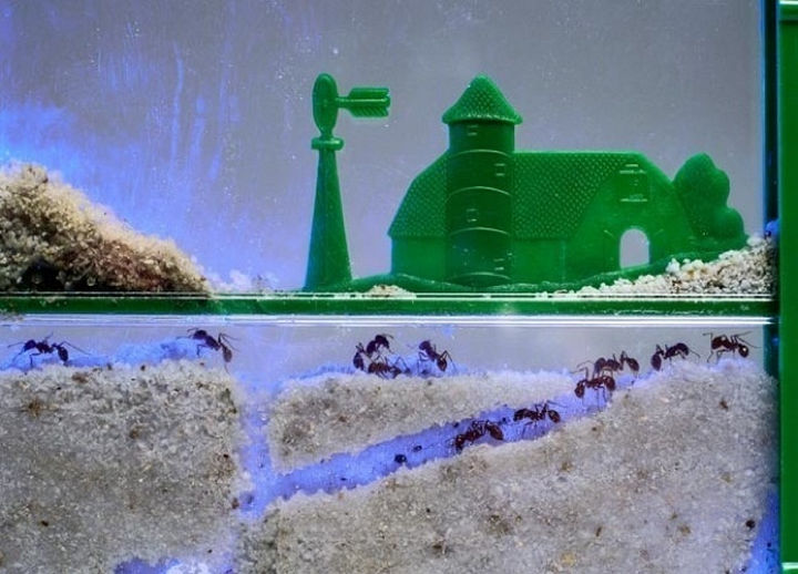 34 Things If You Grew Up in the 60s or 70s - We were mesmerized by ant farms.