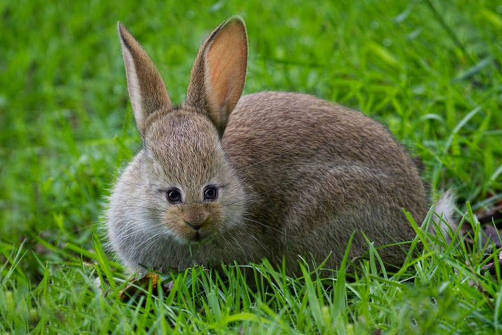 Is it just me or does this bunny manage to even look cuter?