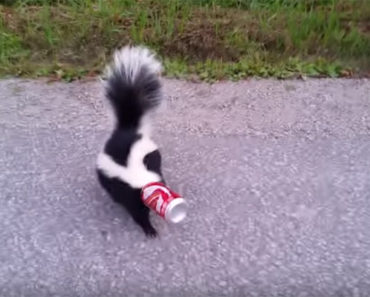 A Skunk Had Its Head Stuck in a Soda Can and What This Brave Man Did Is Heartwarming