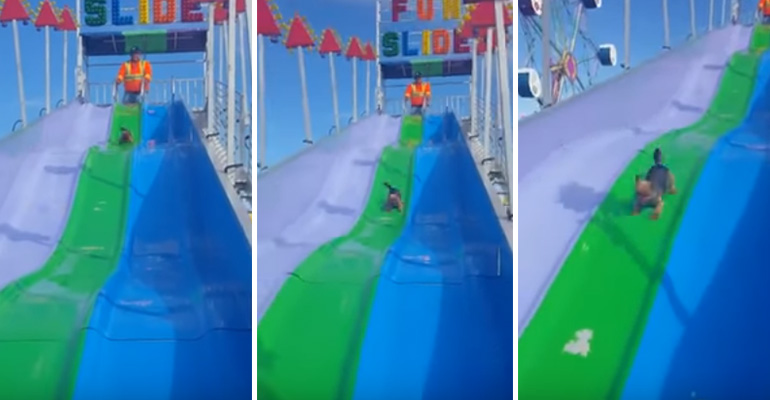 Happy Puppy Having Fun Sliding Down a Carnival Slide.