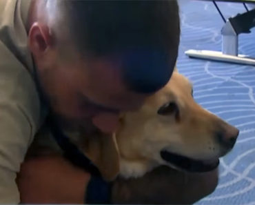 She Reunites a Soldier With a Service Dog Who Saved His Life.