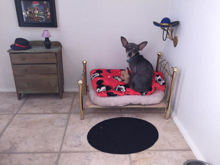 When Poncho gets nervous around company or needs to go to bed, he knows where his bedroom is and loves every inch of it.