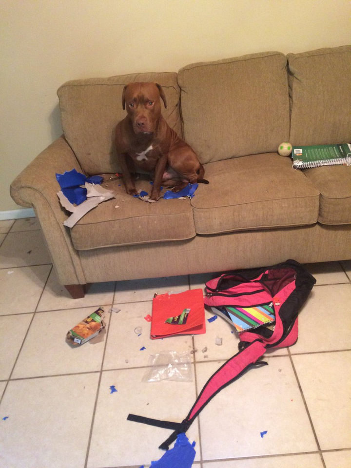 """13 Dogs Feeling Guilty - """"The books made me do it. They told me to eat your bookbag and binders."""""""