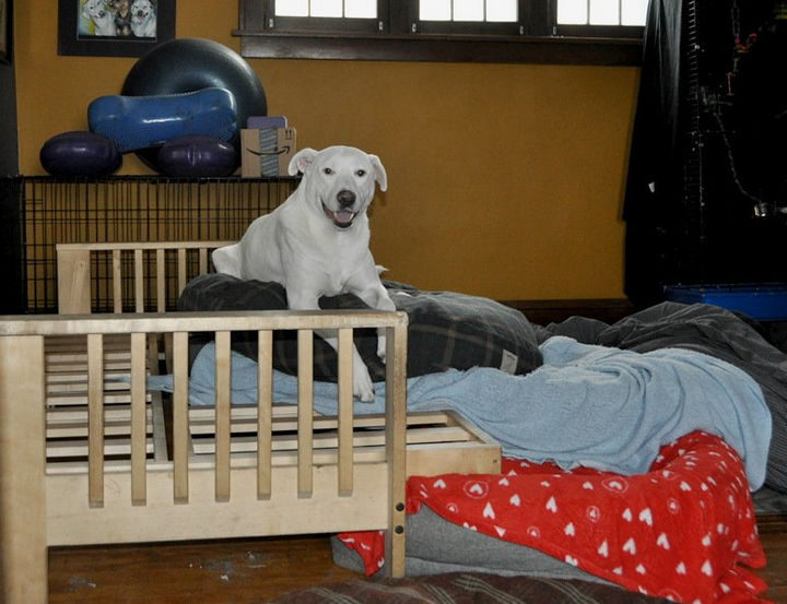 """13 Dogs Feeling Guilty - """"I did it all by myself!"""""""
