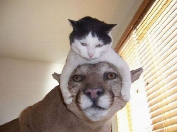 17 Animals That Understand Our Life Struggles - When some people in your life get too clingy.