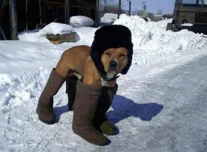 17 Animals That Understand Our Life Struggles - When dressing up to go outside after the first snowstorm.