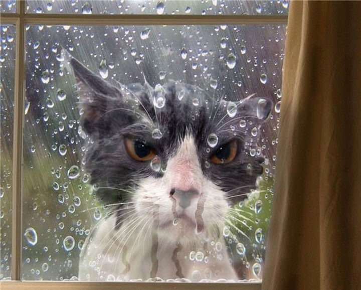 17 Animals That Understand Our Life Struggles - When the day starts off badly and nothing is going your way.
