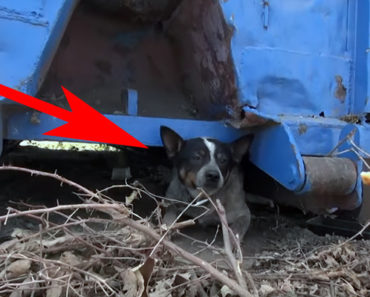 Cowboy the Dog Gets Rescued After Found Living Under a Dumpster.