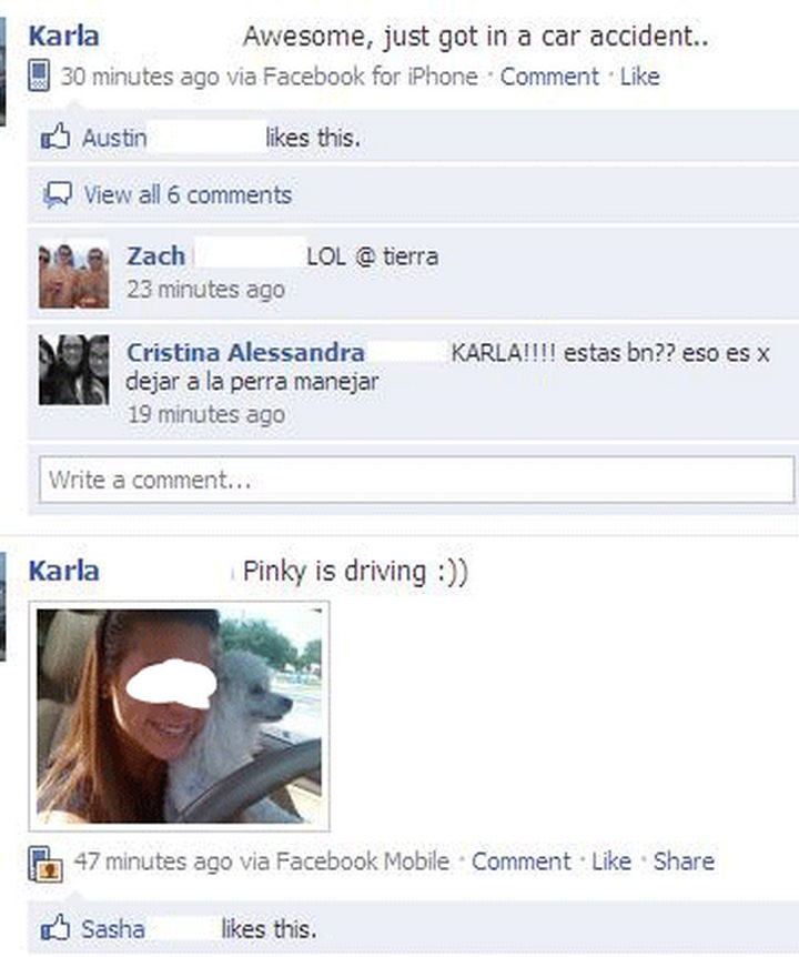 19 Funny Karma Images - Maybe letting Pinky drive was a bad idea.