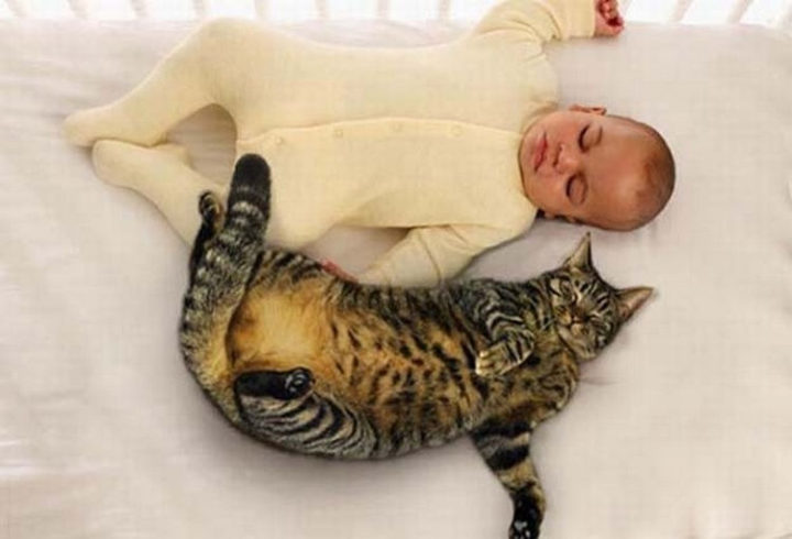 """21 Cats Babysitting Babies - """"You stay on your side of the bed."""""""