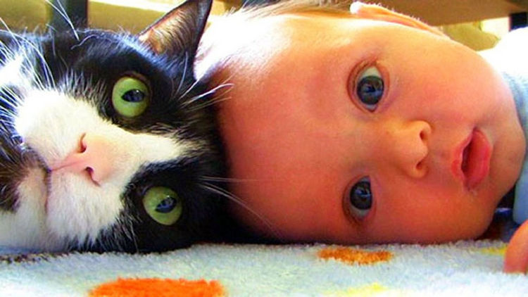 "21 Cats Babysitting Babies - ""He's right there isn't he?"""