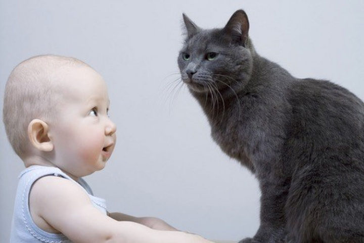 """21 Cats Babysitting Babies - """"Finally, someone that looks up to me."""""""