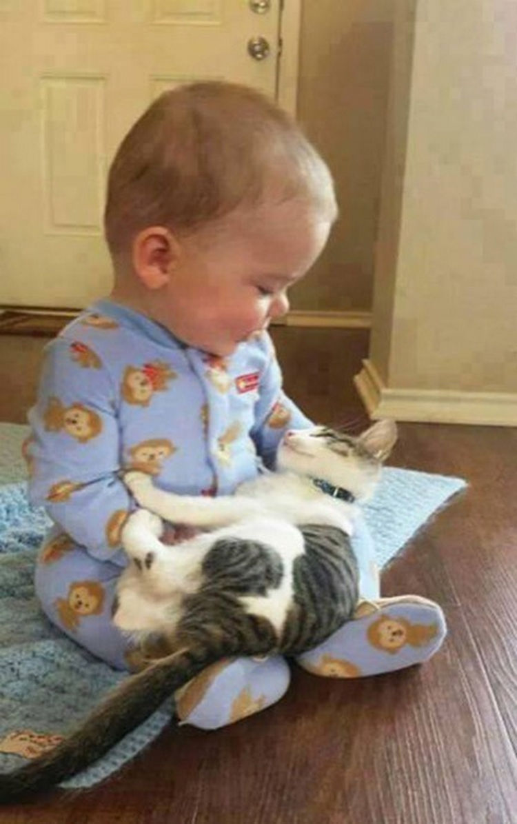 "21 Cats Babysitting Babies - ""How's it going little fella?"""
