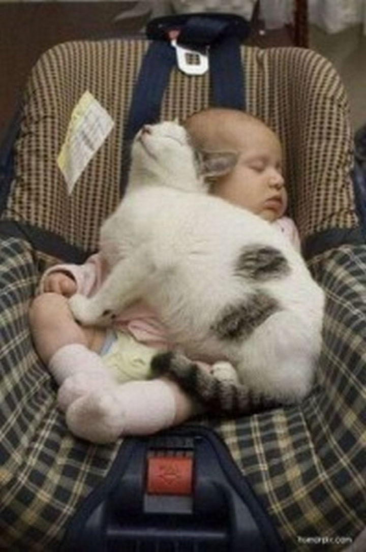 """21 Cats Babysitting Babies - """"I love naptime in the car."""""""