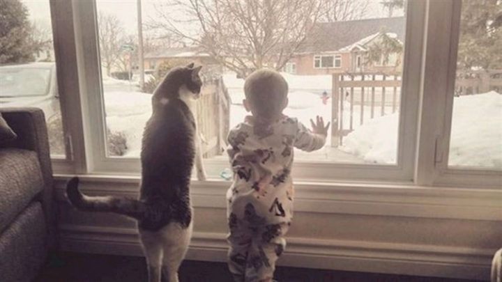 """21 Cats Babysitting Babies - """"So this is what you call snow. Pretty awesome."""""""