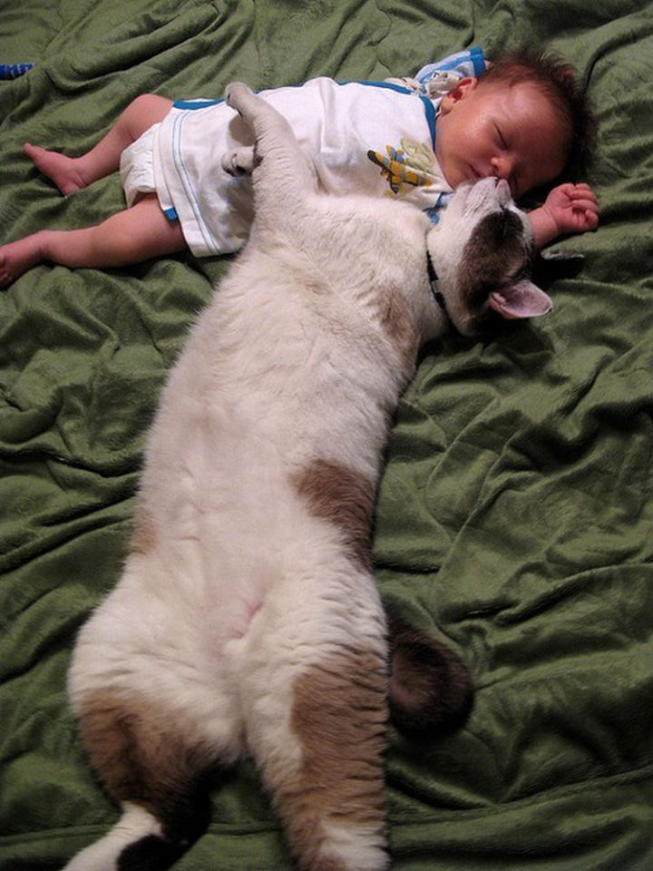 """21 Cats Babysitting Babies - """"This is the only way to get him to stop crying."""""""