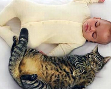 21 Cute Cats Babysitting Adorable Babies. Can You Feel the Love?