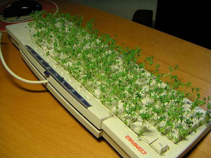 26 Funny Office Pranks - Ch-Ch-Ch-Chia keyboard.