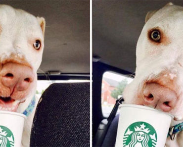 "Shelter Takes Photos of Dogs Enjoying a Starbucks ""Puppuccino"""