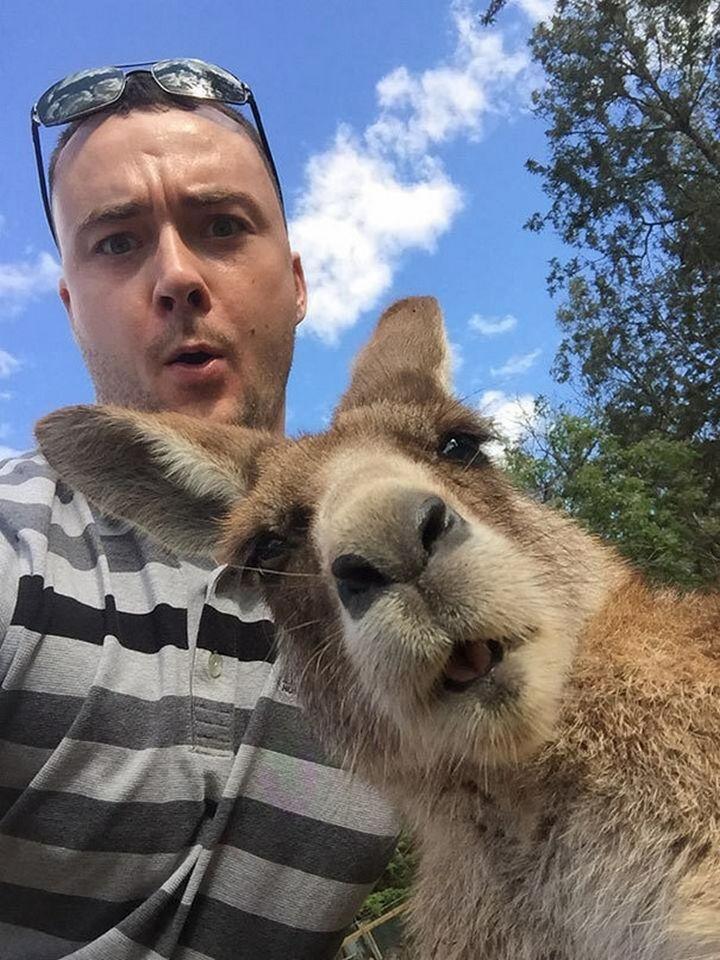 22 Funny Animal Selfies - Kangaroo is lovin' this selfie.