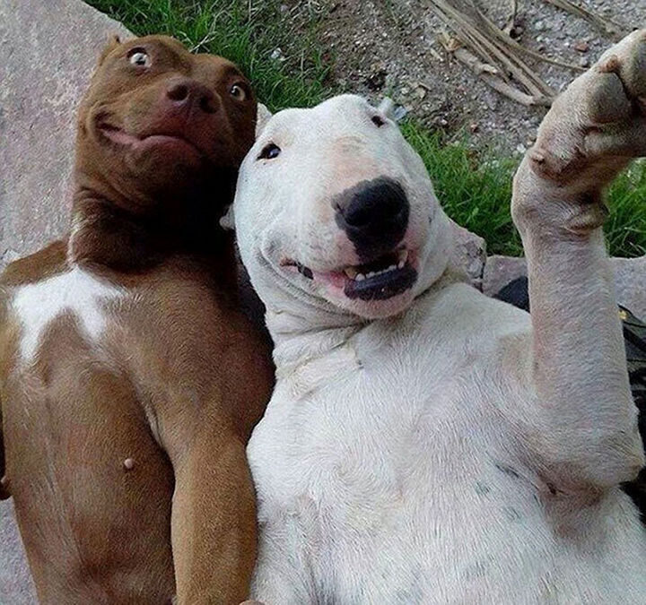 22 Funny Animal Selfies - This is what true friendship looks like.