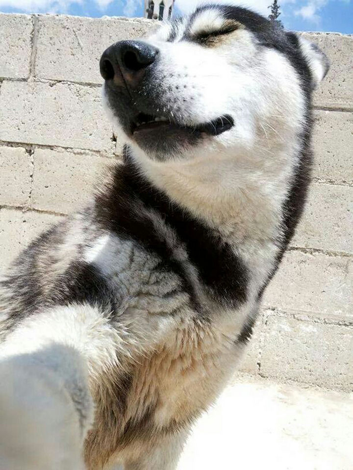 """22 Funny Animal Selfies - """"Make sure to capture my good side."""""""