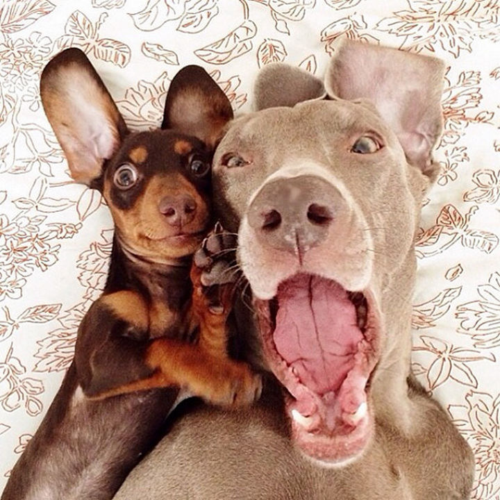 22 Funny Animal Selfies - But when the weekend is almost here, it's all smiles.