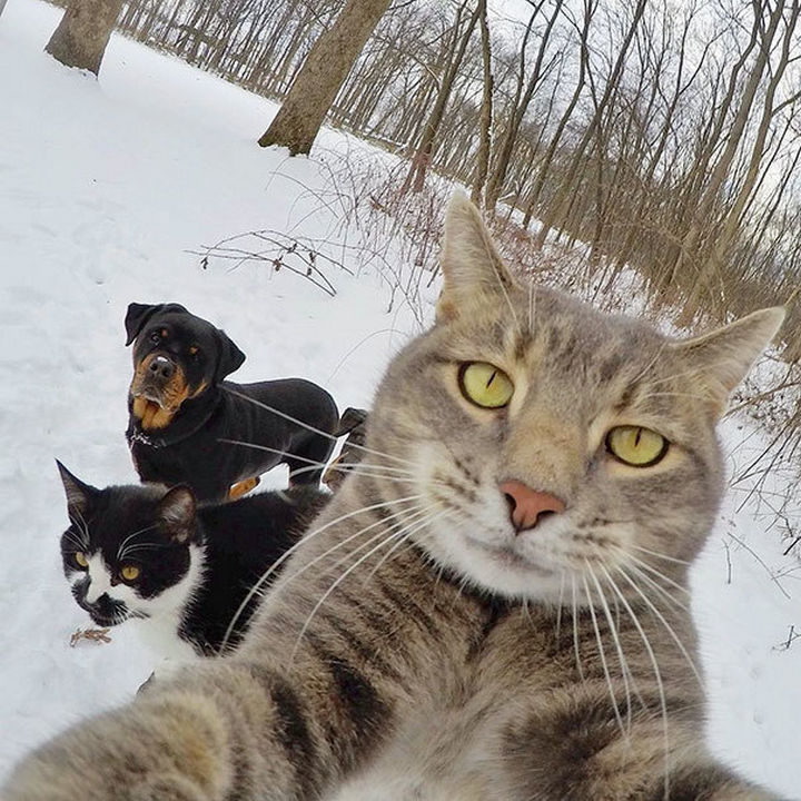 22 Funny Animal Selfies - Setting up the camera for the perfect shot.