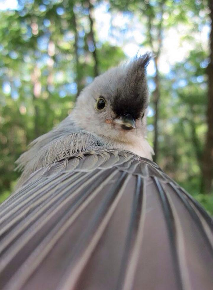 """I wonder if this bird """"tweeted"""" his cute selfie?"""