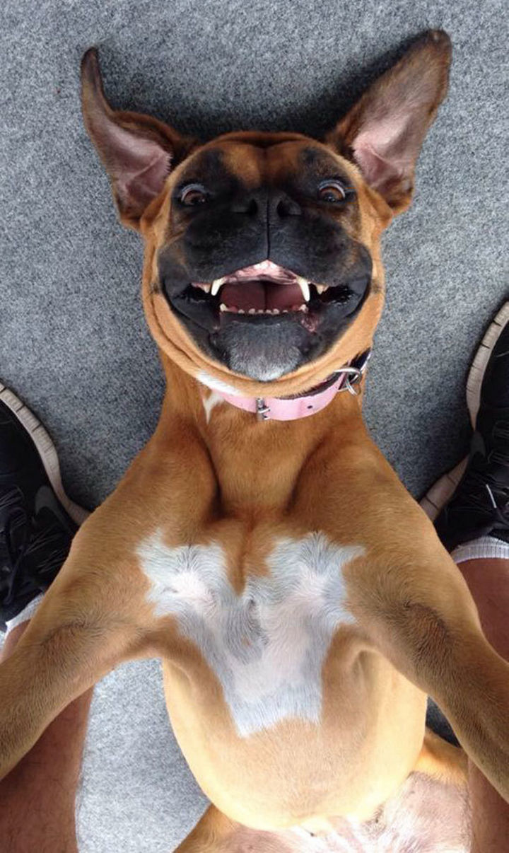 22 Funny Animal Selfies - Someone is having a happy day!