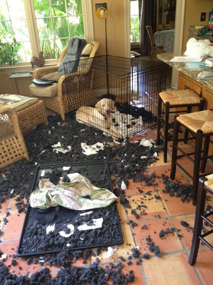 25 People Having a Really Bad Day - When you leave your dog alone while you go for lunch.