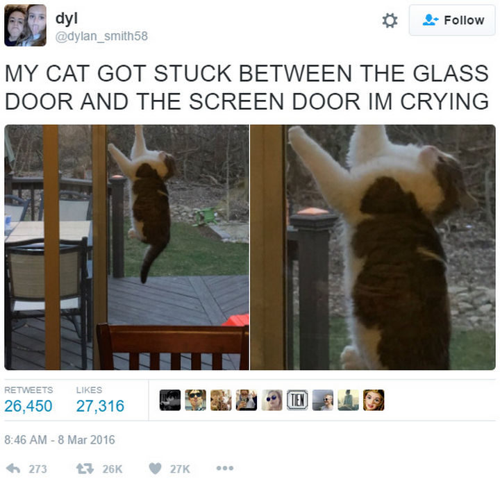26 Funny Photos - If you're having bad day, this cat feels your pain.